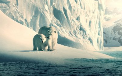 8 Documentary Films about Nature That You Must Watch